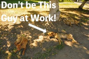 Image of dogs sleeping under a tree and text that says